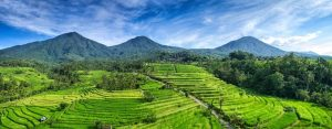 Greenbikesbali-panorama-jatiluwih-UNESCO-cycling-tour